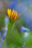 FLOWERS-101