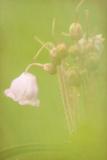 FLOWERS-102