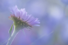 FLOWERS-103
