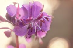 FLOWERS-106