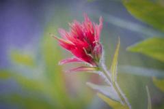 FLOWERS-107