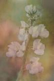 FLOWERS-108