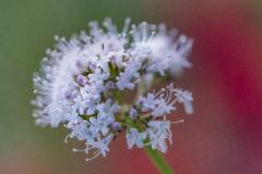 FLOWERS-109