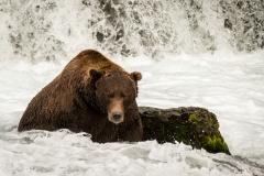 20170920-bears-DSCF1409