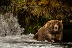 20170920-bears-DSCF1431