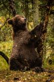 20170924-bears-_DSC2126