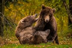 20170924-bears-_DSC2180