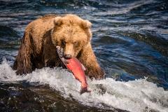 20170924-bears-_DSC2308