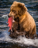 20170924-bears-_DSC2316