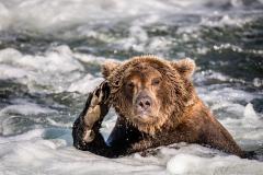 20170924-bears-_DSC2433