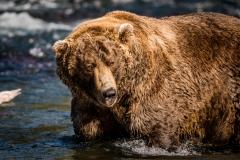 20170924-bears-_DSC2559
