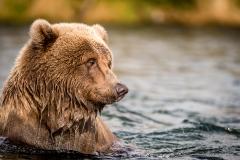 20170924-bears-_DSC2653