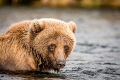20170924-bears-_DSC2654