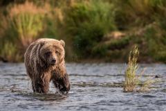 20170924-bears-_DSC2668- SFXPRO