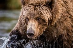 20170924-bears-_DSC2799