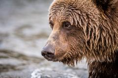 20170924-bears-_DSC2812
