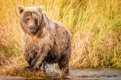 20170924-bears-_DSC2845