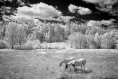 Horses-Edit4510